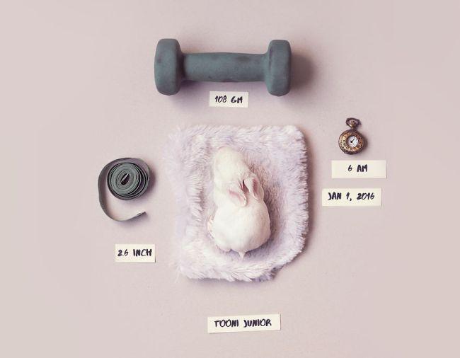 bunny1-57a2761380bdf__880